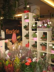 FLORARIA ARIANA > florarie in incinta GOLD PLAZA, Baia Mare, MM, m2015_9.jpg